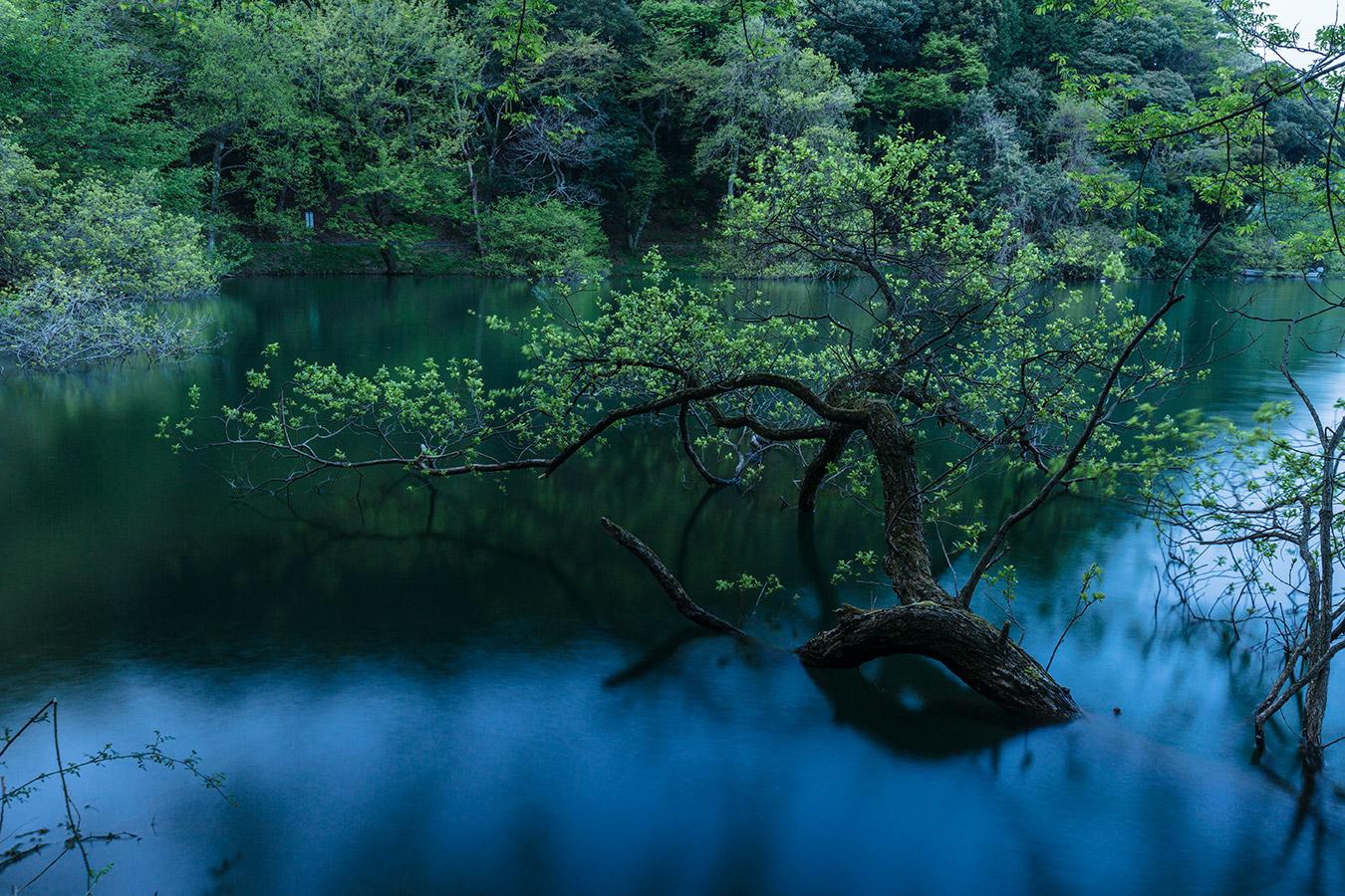 徳山鮓 余呉湖の早春