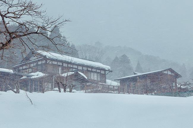 徳山鮓 吹雪の朝